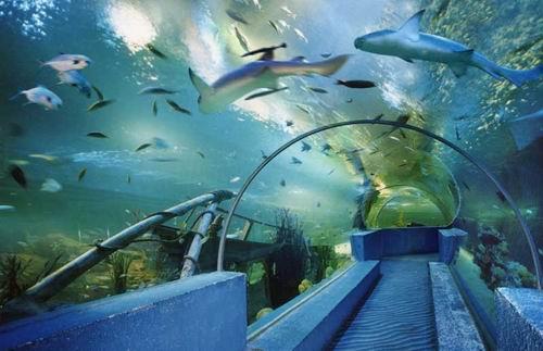 西安曲江海洋世界鲨鱼馆