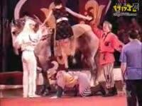 皮皮跳骑马舞 骑马舞 视频