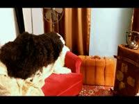 性感美女Joy蕾丝情趣内衣秀可爱俏皮性感超清实体店马坝情趣用品图片