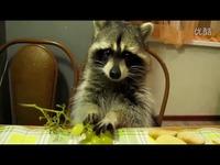 小浣熊吃葡萄 美女 经典