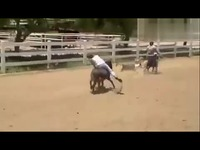 超清预告片 美女骑矮马 200